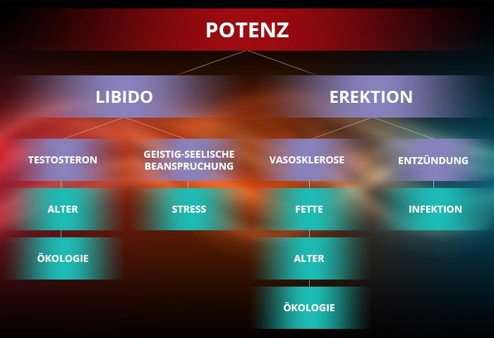 Potenz Info